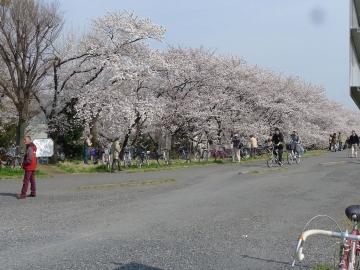 hanami1404012.jpg