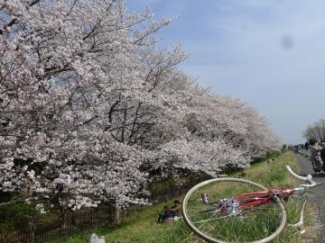 hanami1404013.jpg