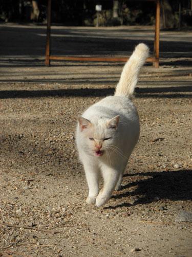 矢作神社の猫1