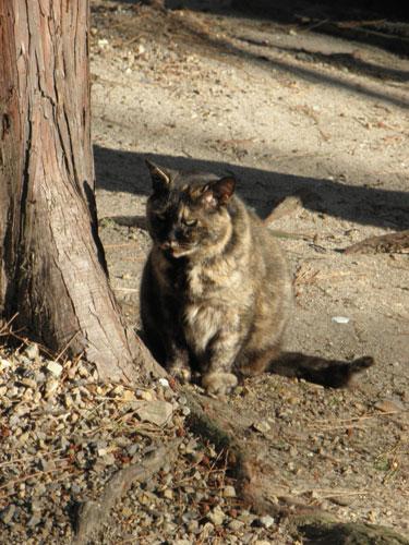 矢作神社の猫3