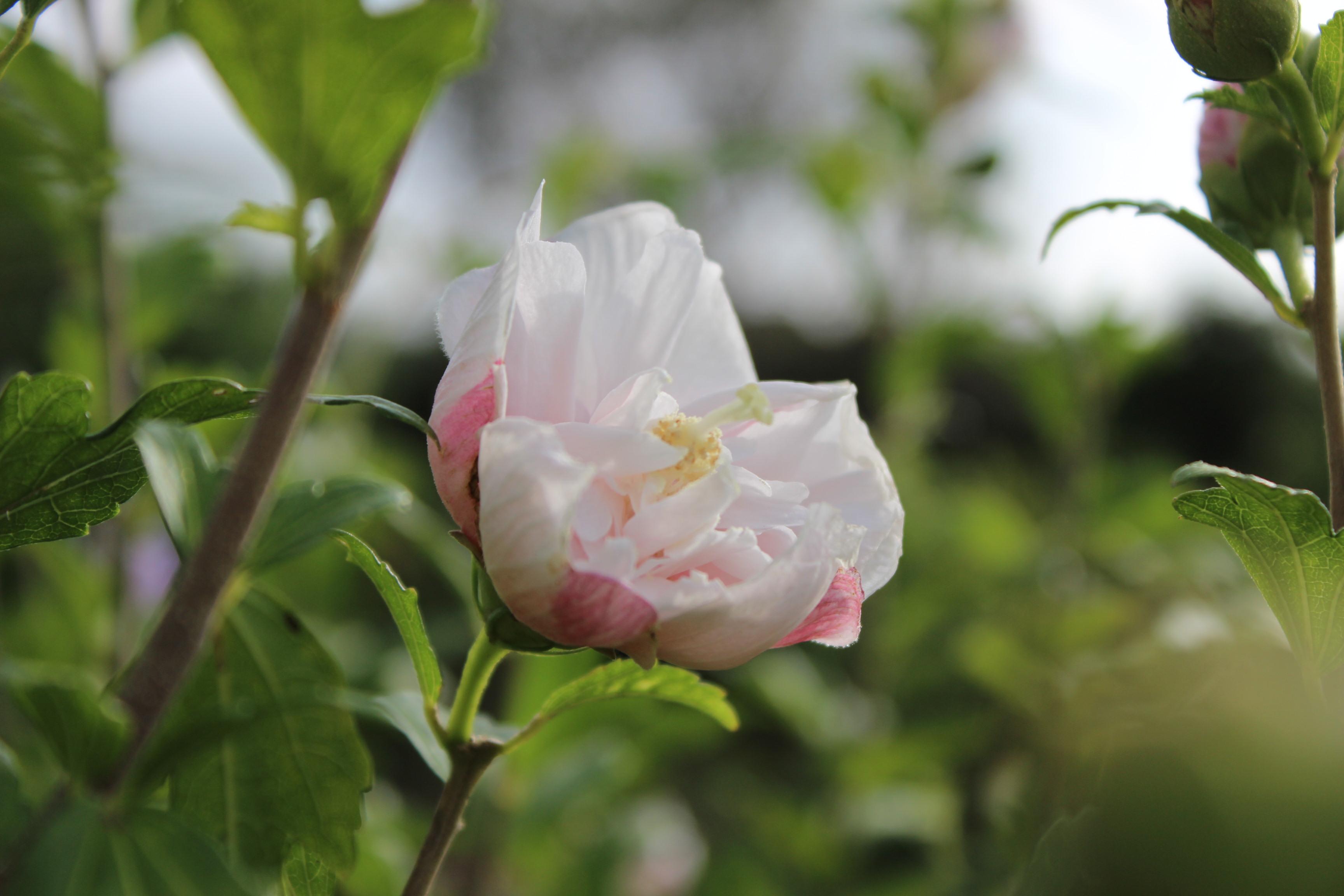 white flower 001