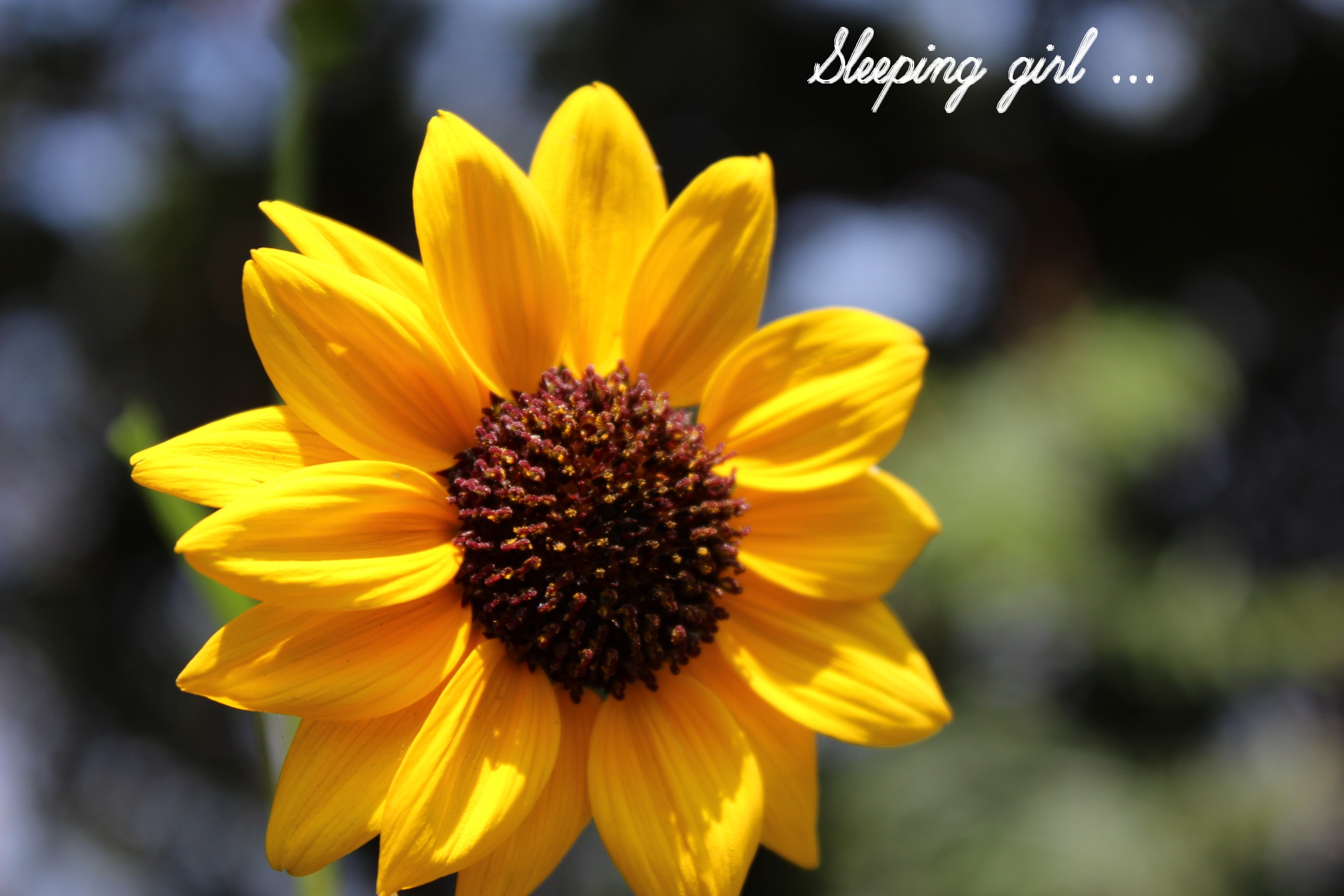 yellow flower 003