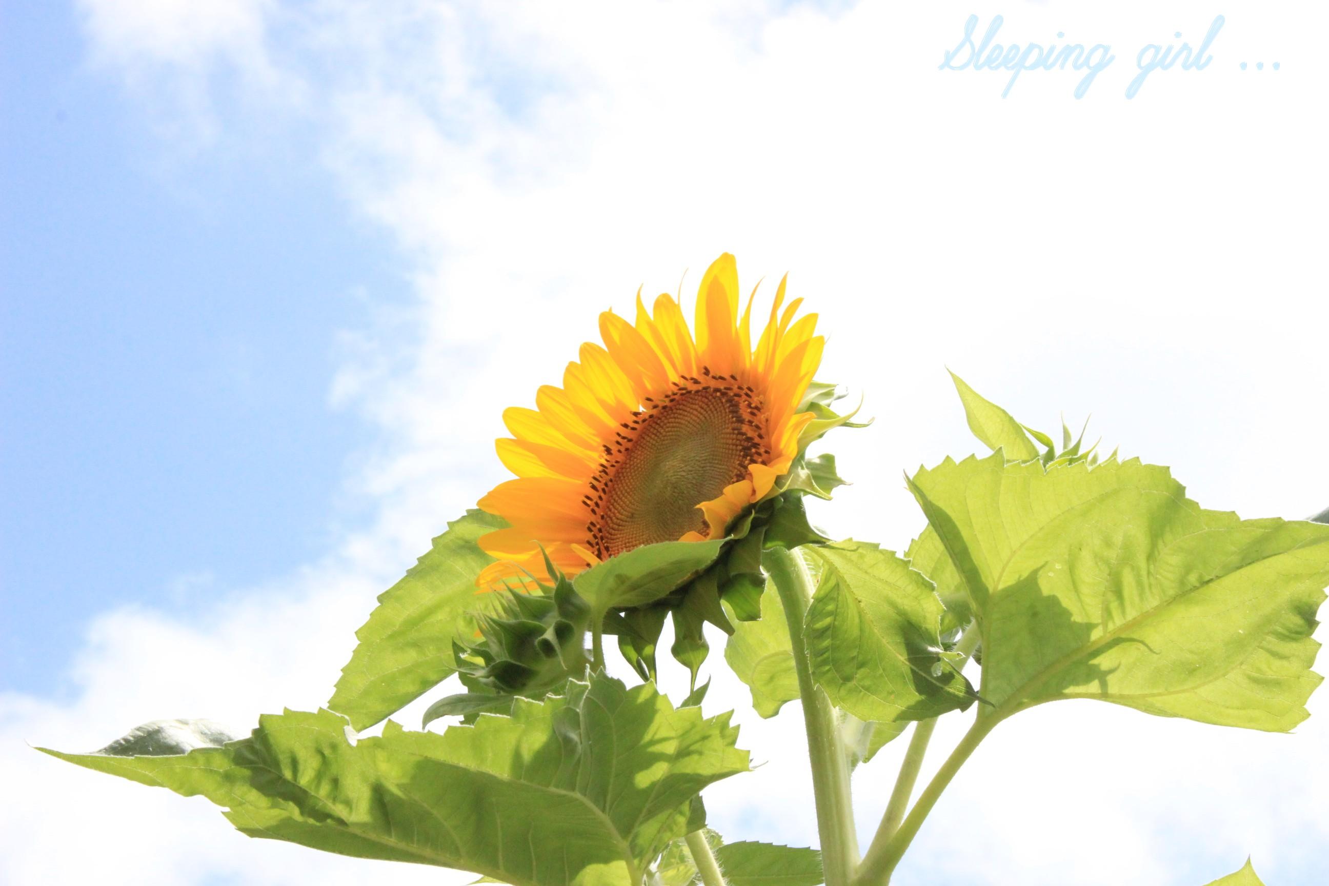 yellow flower 004
