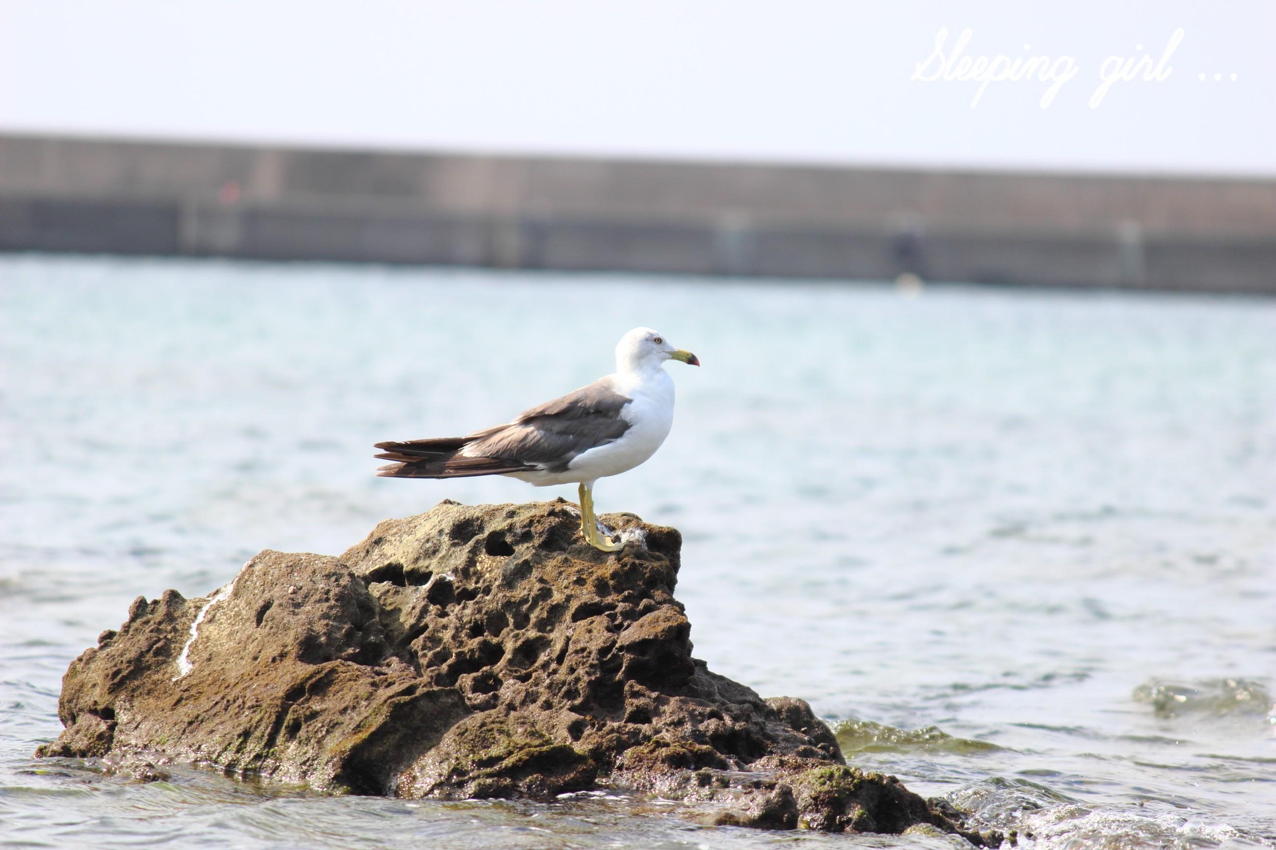 Gull 002
