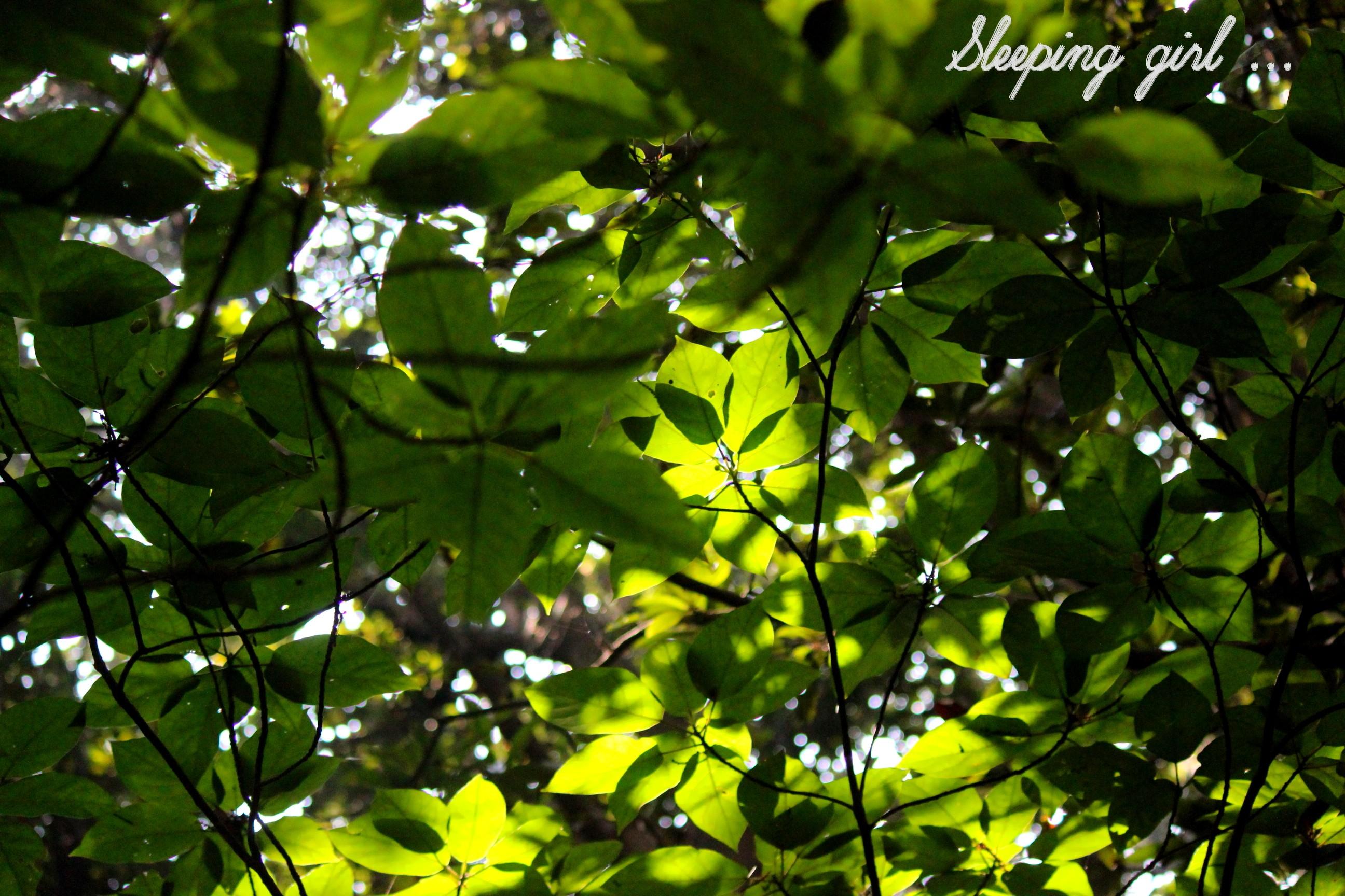 Green 001