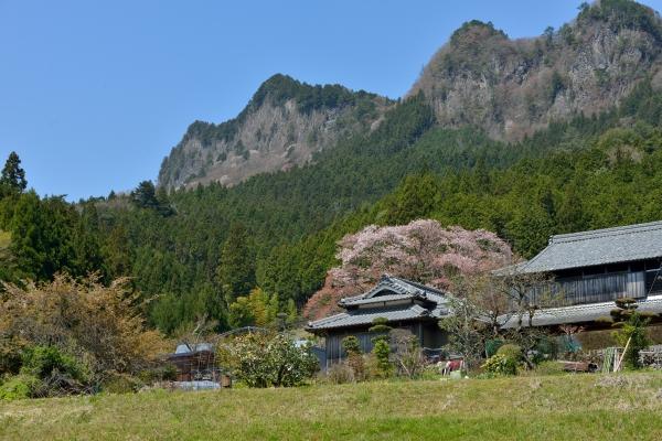 奈良からの手紙 2014奈良の桜 屏風岩 (曽爾村)