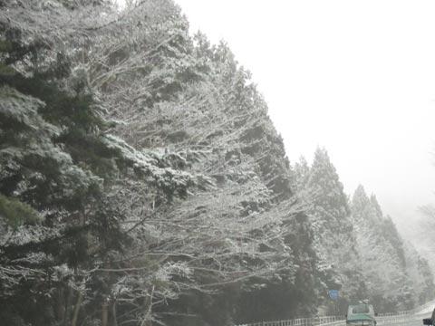 20120306p.jpg
