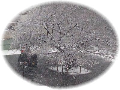 雪景色 桜の木 円形