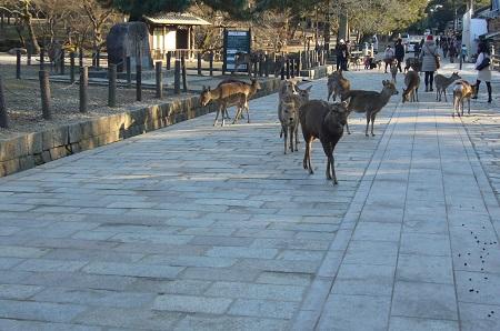narakouenn 鹿