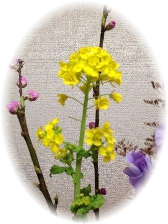 菜の花円形