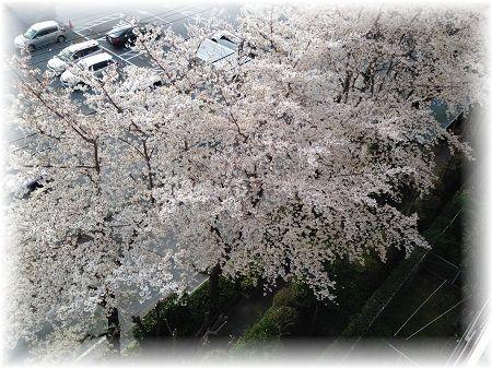 桜ベランダから ぼかし