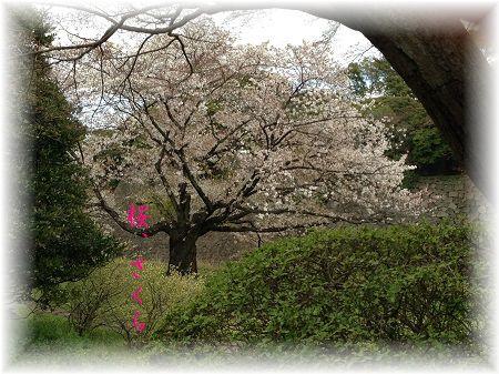 桜1 ぼかし字入り