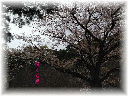 桜2 ぼかし字入り