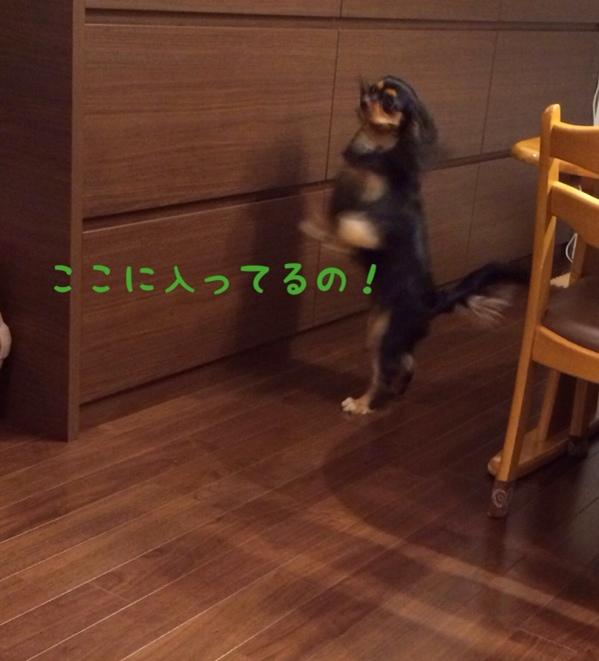 fc2blog_2014021722545108e.jpg