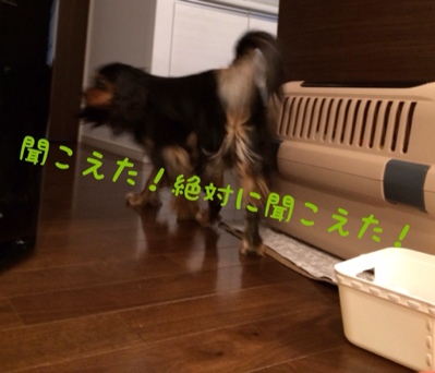 fc2blog_201403201748447c4.jpg