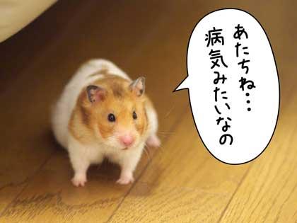 がんばっ!1
