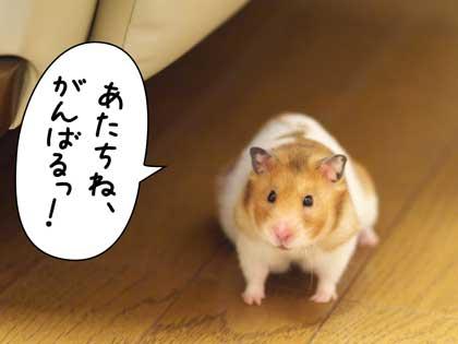 がんばっ!3