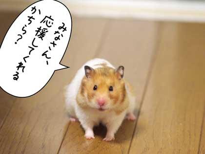 がんばっ!4
