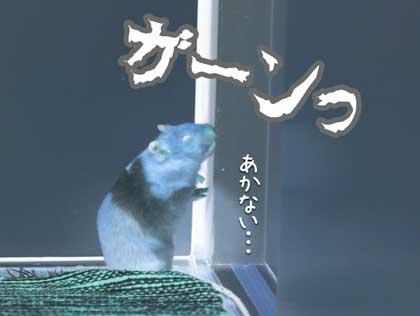 しめしめ3
