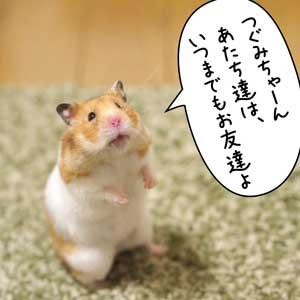 つぐみちゃん1