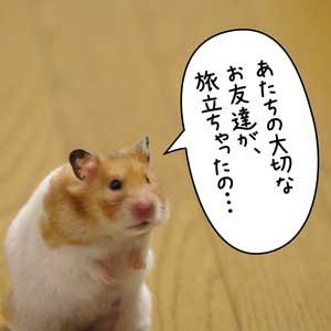 つぐみちゃん