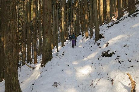吉和冠 樹林帯