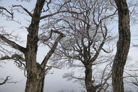 吉和冠 霧氷