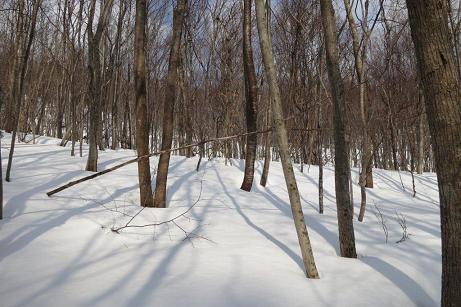 吉和冠 木々と雪原