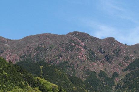 ピンクに染まった山