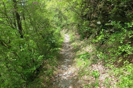 柳谷コースの下山道