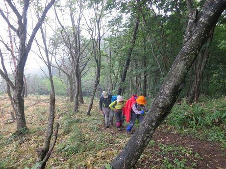 埴林帯の急登