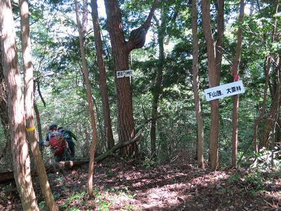 大栗林下山路
