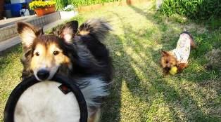 フリスビー&ボール