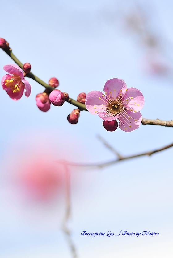 大湊(オオミナト)4