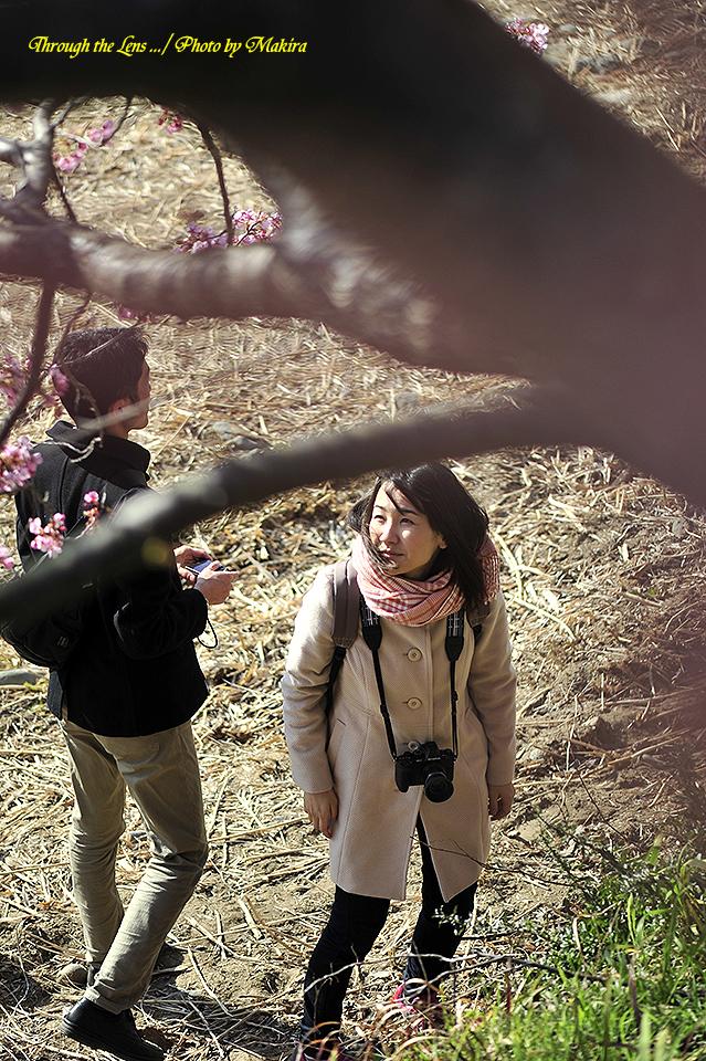 あの桜もいいな~♪