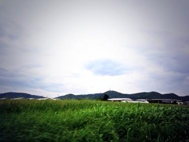 今日は雨の天気の石垣島でした^^