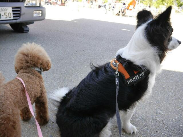 介助犬フェスタ