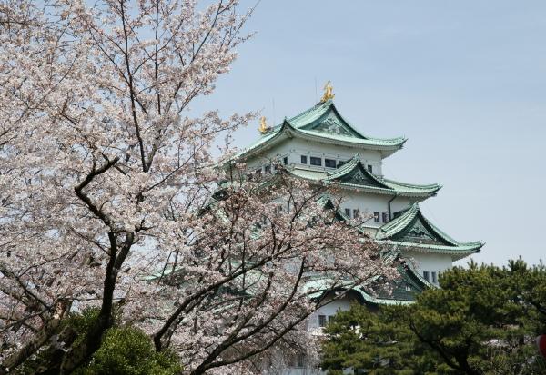 名古屋城桜4