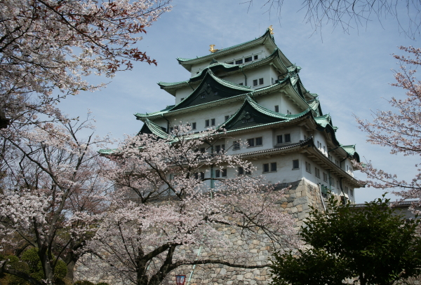 名古屋城・桜3