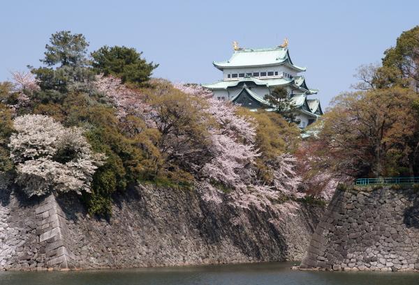 名古屋城桜2