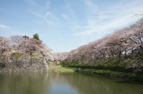 名古屋城・桜1