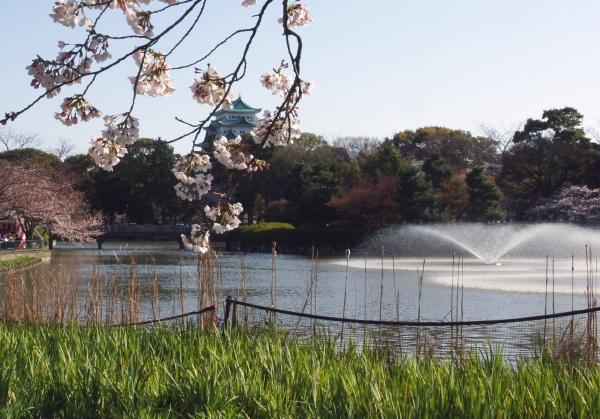 名古屋城桜10