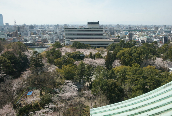名古屋城桜9