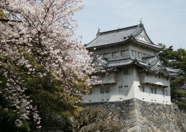 名古屋城桜7