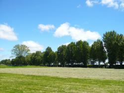 八紘学園のポプラ並木