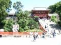 H26.9.12鶴岡八幡宮の大銀杏と拝殿@IMG_2175