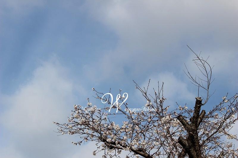 IMG_4123.jpg