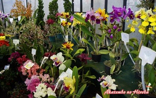 0-秋祭り2014年花