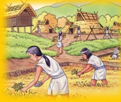 弥生時代の稲作