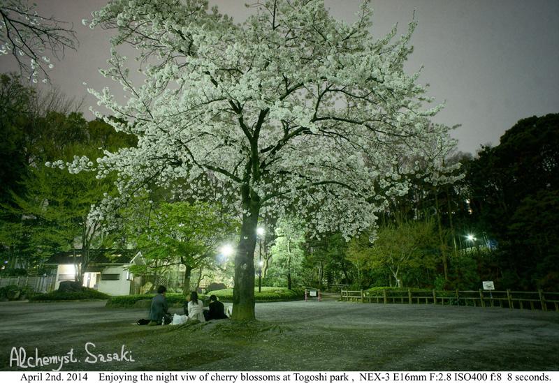 夜桜DSC08424